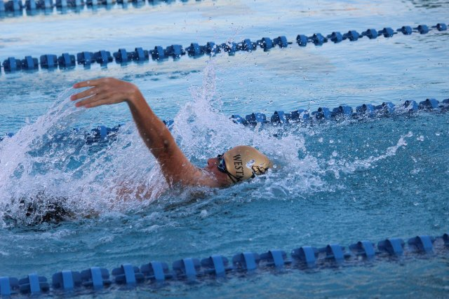 Westminster Swimming