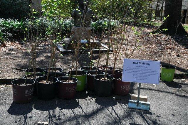 Arbor Day 2017-6.jpg