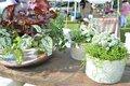 Chelsea Farmers Market-8.jpg