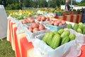 Chelsea Farmers Market-9.jpg