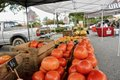 Summit Farmer's Market Photos - 4.jpg