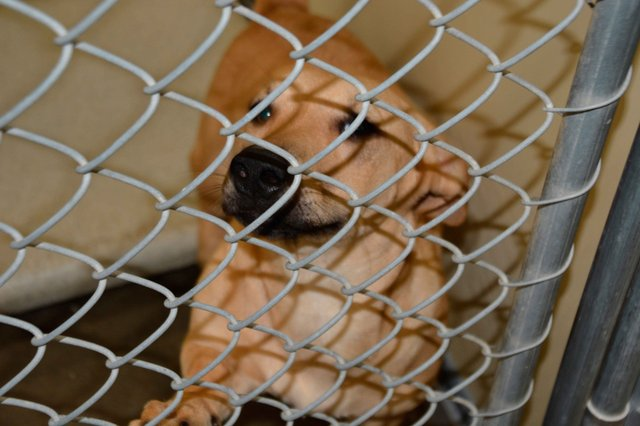 An adoptable furry friend at the Shelby County Humane Society