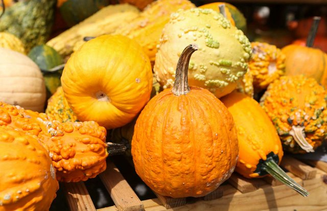 280-EVENTS---OM-Harvest-Fest.jpg