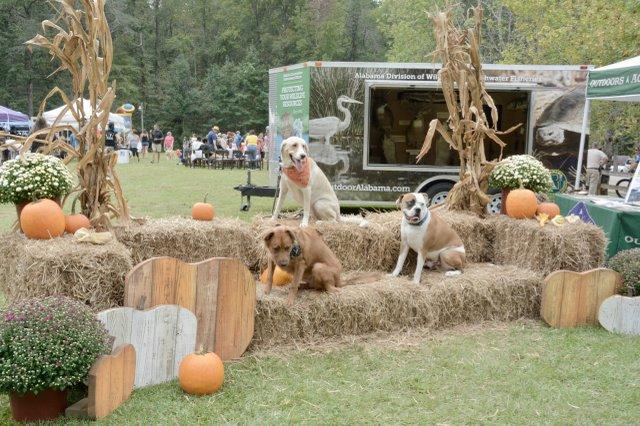 OMSP harvest festival  - 26.jpg