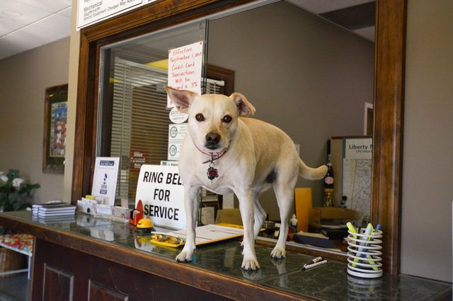 280-COVER---Pets-at-Work1.jpg