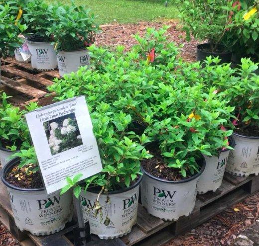 Aldridge spring plant sale 2018
