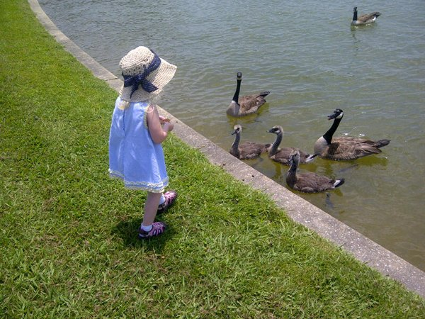 Feeding-Geese.jpg