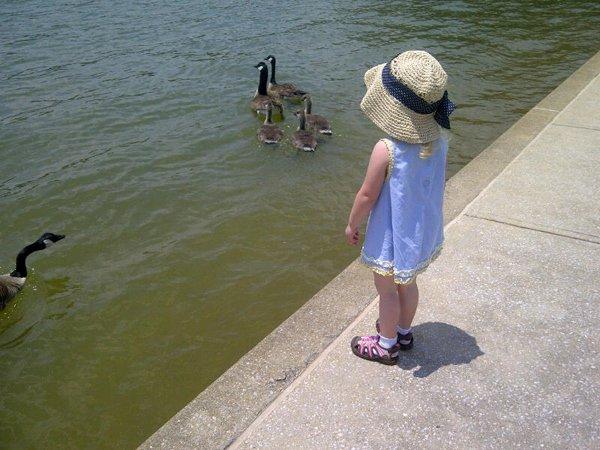 Feeding-the-Geese.jpg