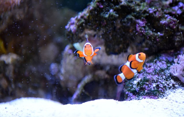 FEAT---Reef-Aquarium_NKF_6521.jpg