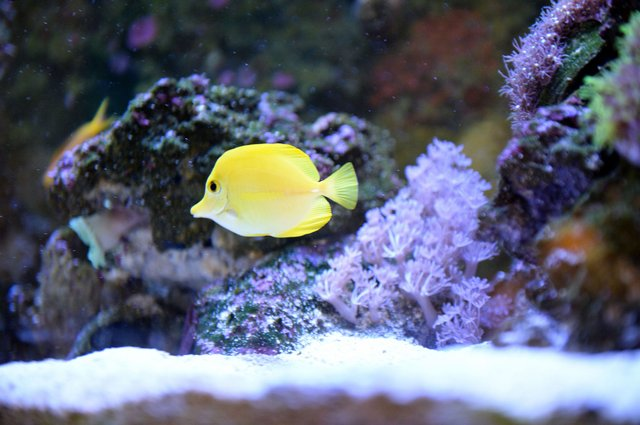 FEAT---Reef-Aquarium_NKF_6528.jpg