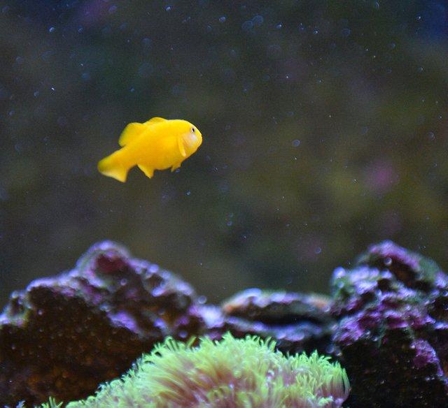 FEAT---Reef-Aquarium_NKF_6533.jpg