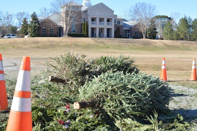 280 Christmas Tree Recycling - 1.JPG