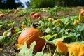 EVENT---Pumpkin-Patch.jpg