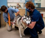 SMG_Veterinary-Specialists-of-Birmingham_201230_3.jpg
