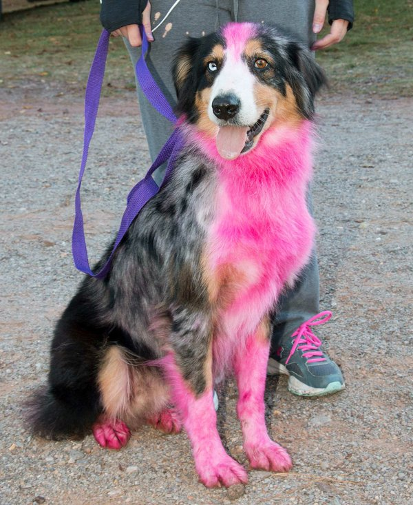 280-EVENTS-paws-for-cause.jpg