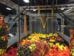 CircusTrix Ninja Course.jpg